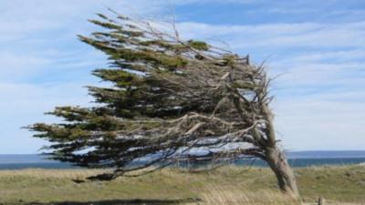 Alerta meteorológica por fuertes vientos para Chubut