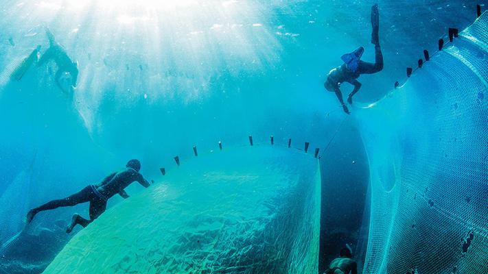 Lanzaron iniciativa mundial para acabar con la basura marina y limpiar los océanos