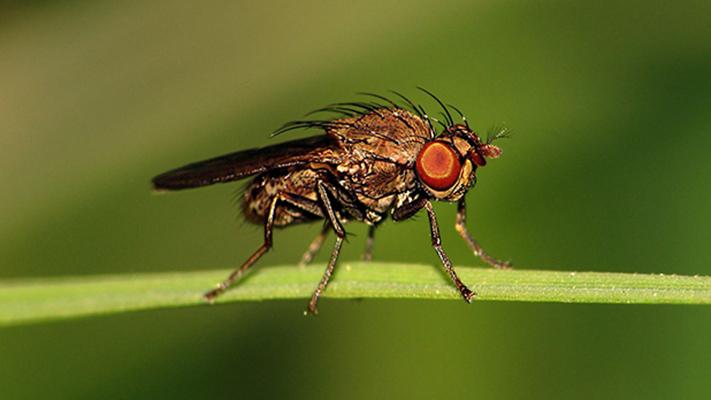 Estudiar moscas para entender el comportamiento humano